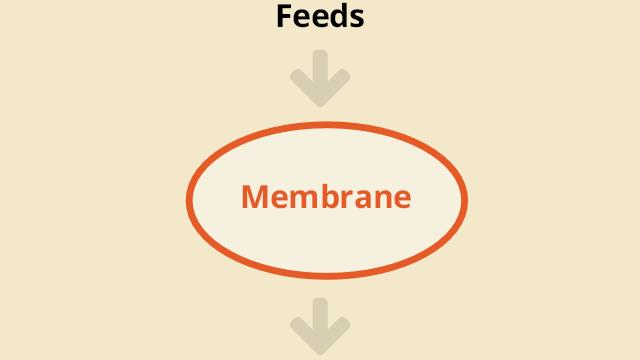 Feeds → Membrane